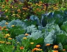 Was bedeutet naturnah gärtnern? – Teil 2