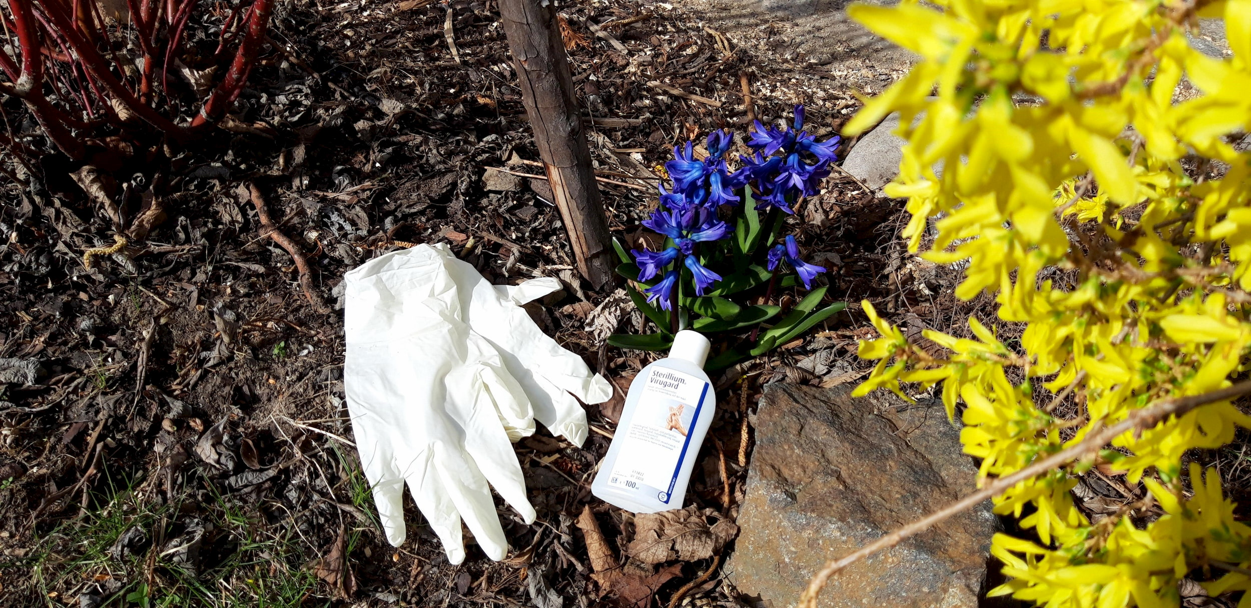 Desinfektionsmittel, Einmalhandschuhe und Blumen